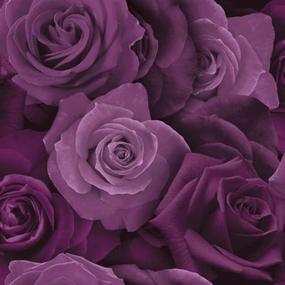 Austin Rose Wallpaper Purple Arthouse 675601