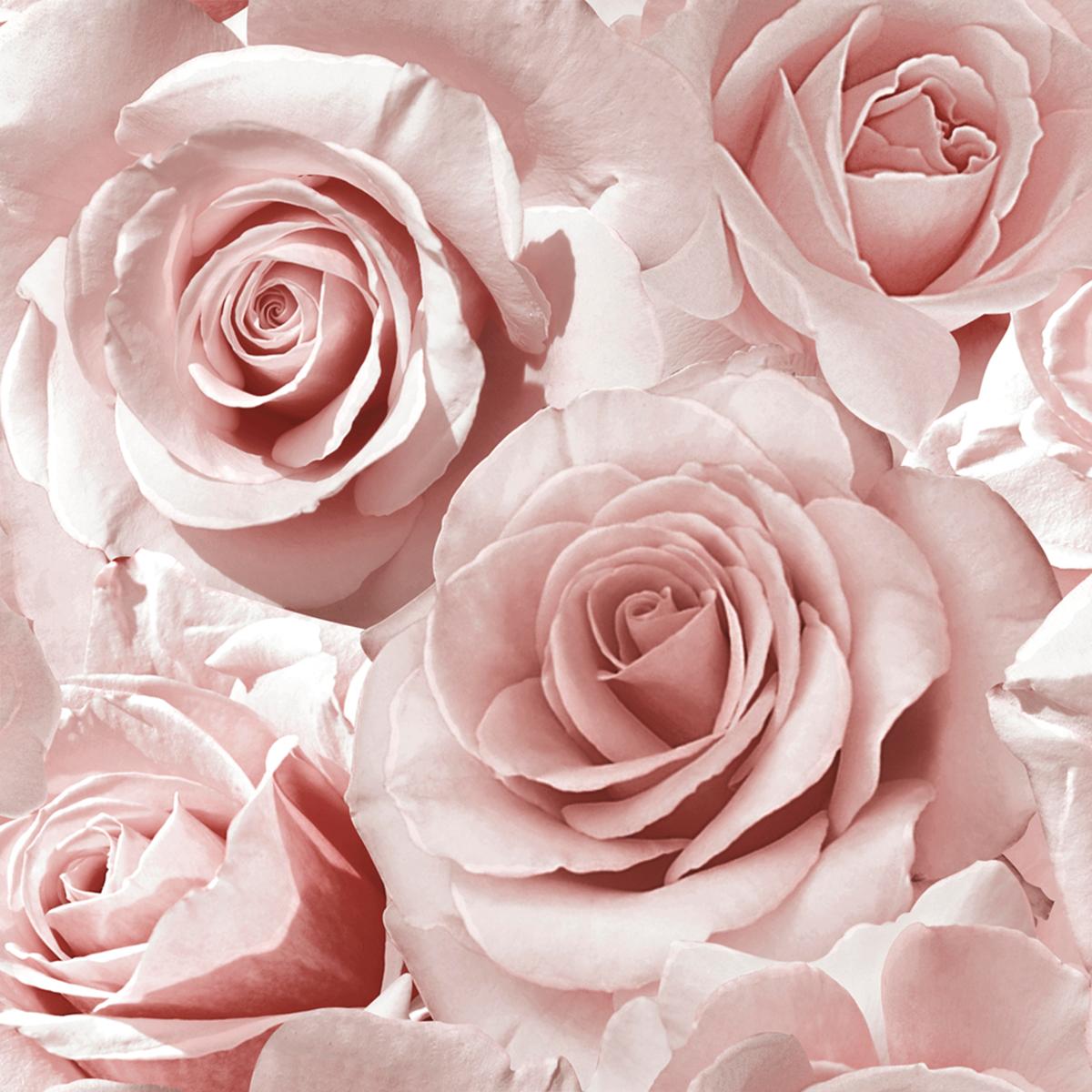 Madison Rose Floral Wallpaper Raspberry Pink Blush