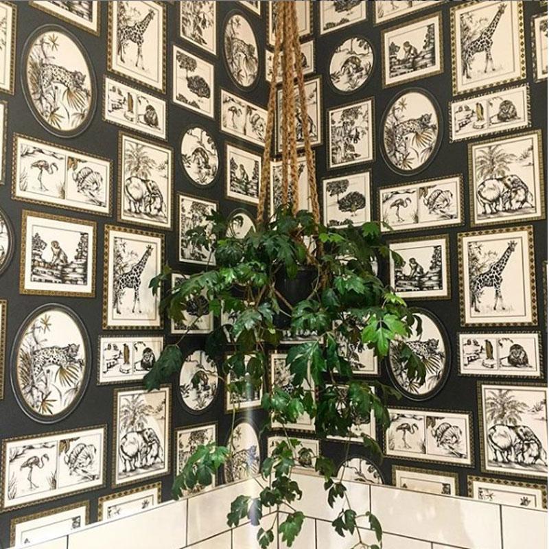 safari frames wallpaper