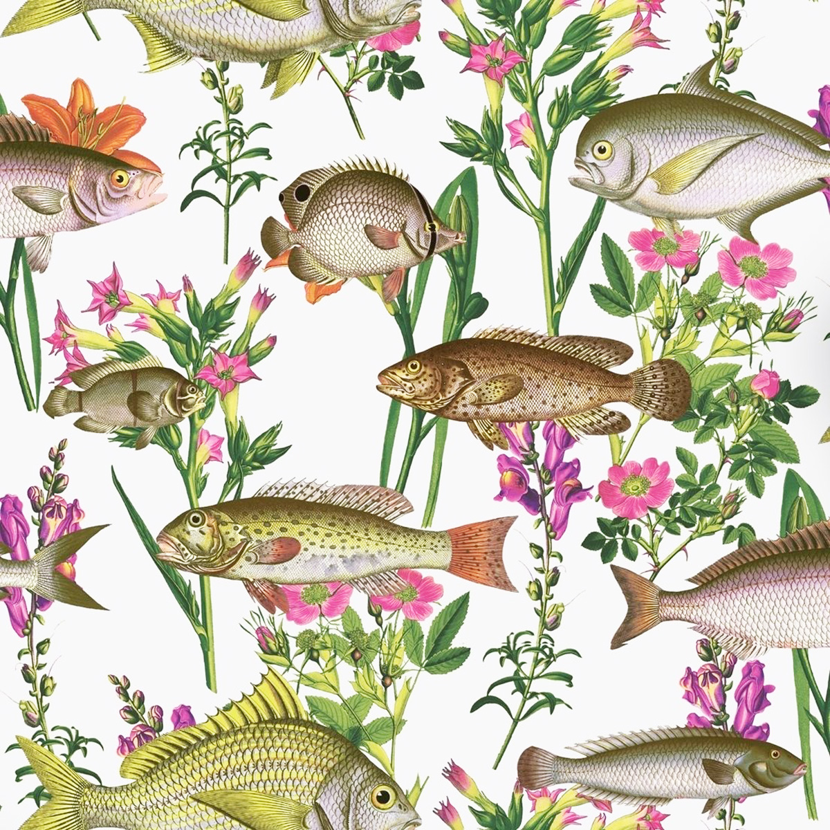 Lagoon Fish Wallpaper White Holden 12170
